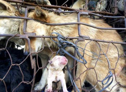 dog meat trade 2